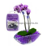 Bee Bloom Orchideen HydroGel Perlen Deko-Substrat